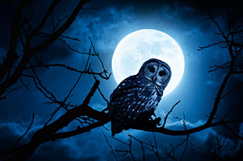 Owl on branch with moon
